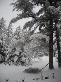 Amherst New Hampshire Snow Storm