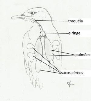 http://www.wikiaves.com.br/a_vocalizacao_das_aves