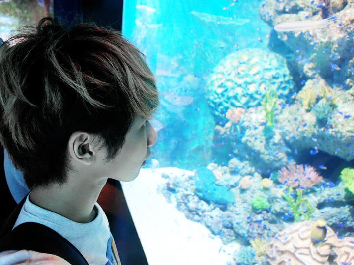 typicaben viewing S.E.A. Aquarium world's largest aquarium
