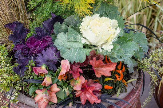 A Quick Fall Vegetable Planting Primer - Environmental Watch