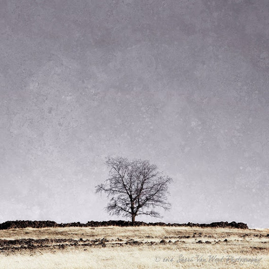 Lone Winter Tree Color Photograph Purple & by sherivwphotography