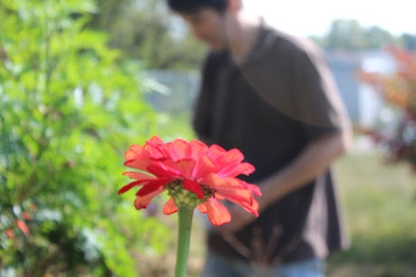 In The Garden1