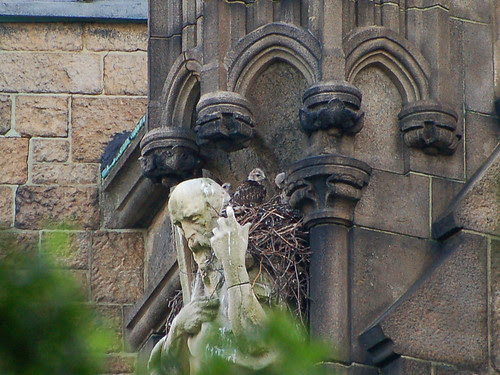 Three Cathedral Red-Tail Nestlings
