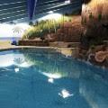 survival condo pool pic
