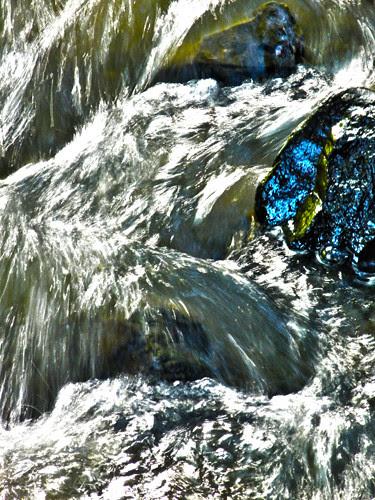 Creek in Berkeley _ 2293