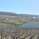 Marne: un septuagénaire meurt écrasé par un utilitaire dans les vignes