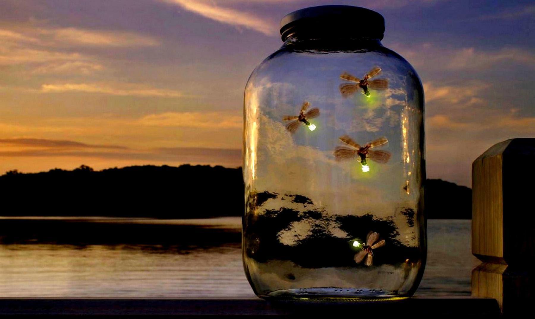 Resultado de imagen de luciérnagas