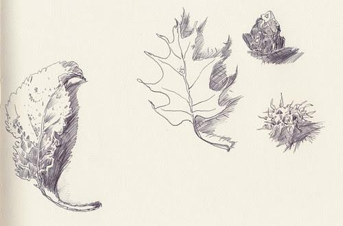 December 2013: Treasures by apple-pine