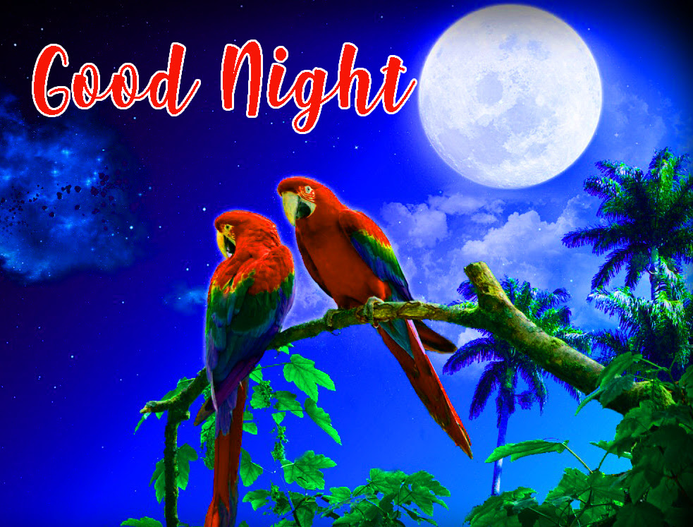 644 Good Night Images Hd Wallpapers Pics Photos Pictures Download
