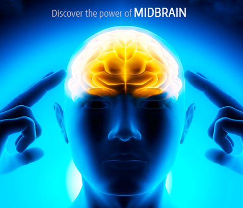 Mid Brain Activation | Midbrain Activation Software | Midbrain Activation Franchise India
