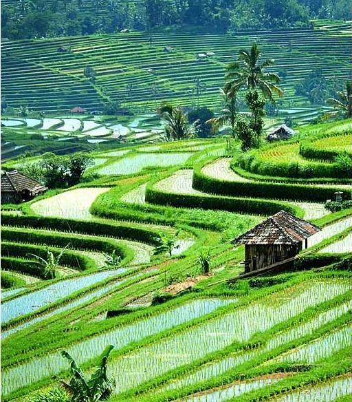 80 Gambar Alam Indonesia Terbaik