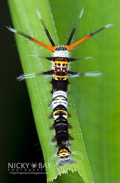 Caterpillar - DSC_8048