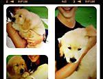 Bonner publica fotos dos trigêmeos com o novo cachorrinho da família