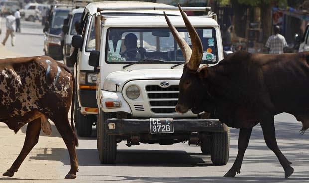 A passagem de uma manada de bovinos provocou congestionamento em uma rua da cidade de Juba, no Sudão. O flagra foi feito neste domingo (26) pelo fotógrafo Goran Tomasevic.