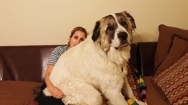 46. ​​Because love sitting size dog