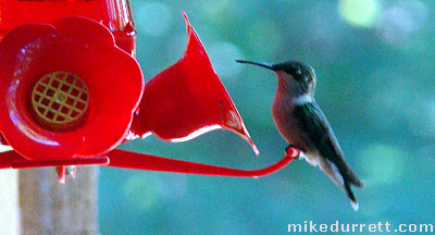 What's this? A hummingbird!