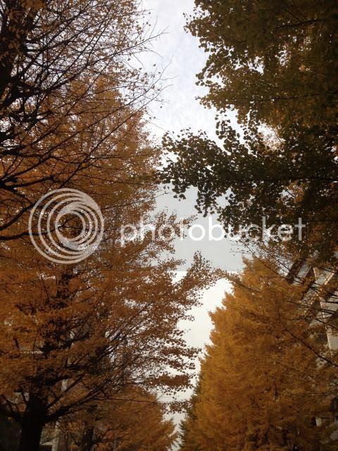 photo IMG_5543_zps224604b0.jpg