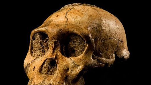 If We Cloned Early Humans, Should We Put Them in a Zoo or a School?