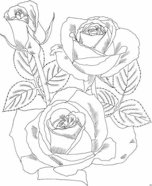 Dibujos de rosas Hermosas para colorear) Leer Más...http://goo.gl/IqRv1L