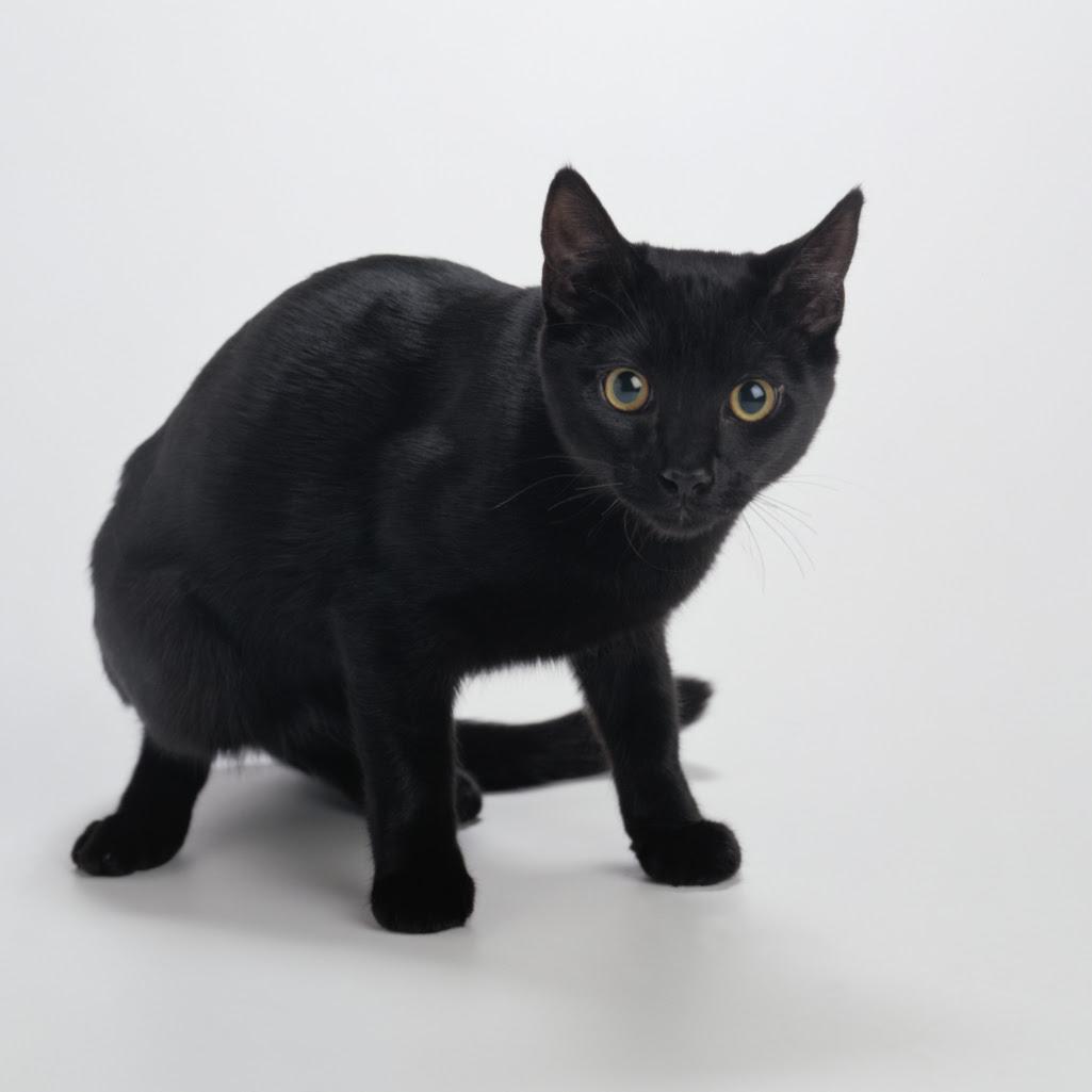 Problems With Inbreeding Cats Animals Mom Com