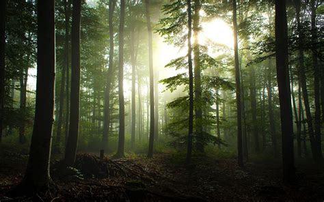 visit  black forest germany xcitefunnet