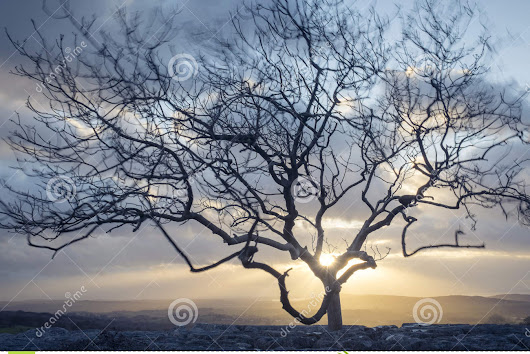 Wind-blown Tree Stock Photo - Image: 62059316