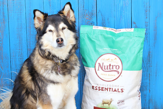 Have You Checked Your Dog Food Ingredients Lately? - With Our Best - Denver Lifestyle Blog
