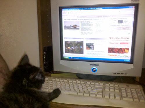 NOLA.com kitty