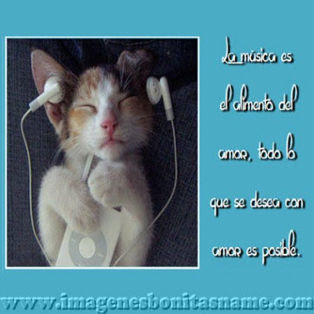 Gatito Escuchando Musica Imagenes Bonitas Frases Bonitas