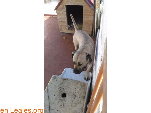 Perros ya adoptados » España » Las Palmas - Gran Canaria » ADOPTADA! Adopción responsable
