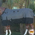 "76"" Hilason 1200D Poly Waterproof Turnout Winter Horse Blanket Grey Black"