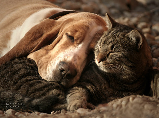 cat pillow-dog blanket