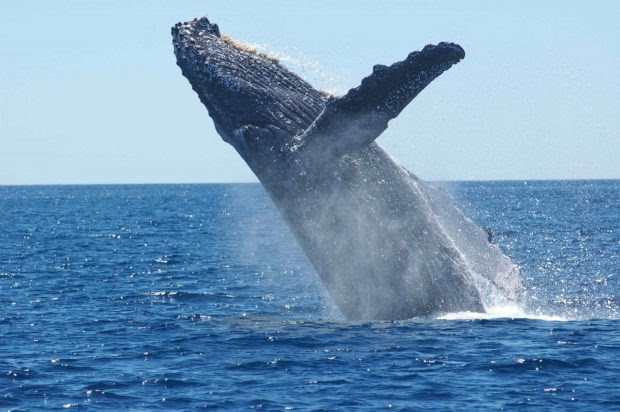 What Are The Best Places For Whale Watching In The Hawaii?