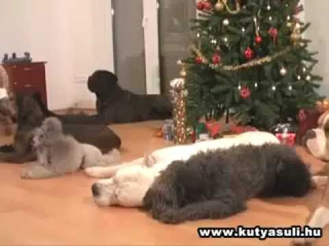 Dogs Decorating a Christmas Tree(video)