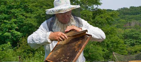 Προστασία των μελισσών από τη χρήση φυτοπροστατευτικών προϊόντων