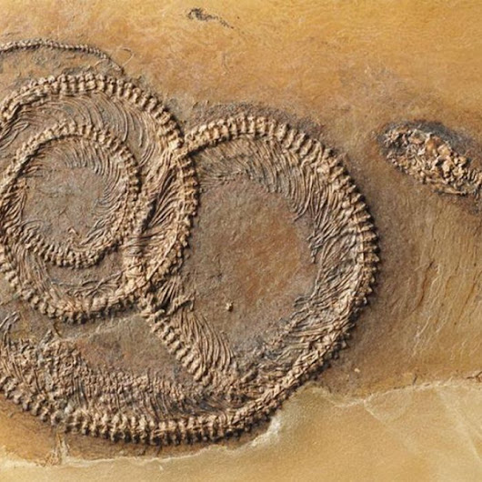 Fossil 'Nesting Doll' shows bug in lizard in snake