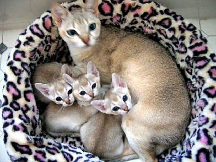 Unduh 101+  Gambar Kucing Persia Terkecil Di Dunia Paling Lucu HD