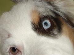Mommie's Marilyn Manson puppy =)