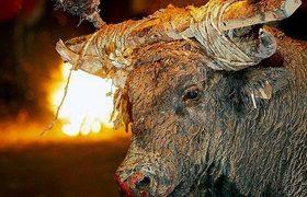 Regulan los 'correbous' en Cataluña pese al rechazo de los animalistas