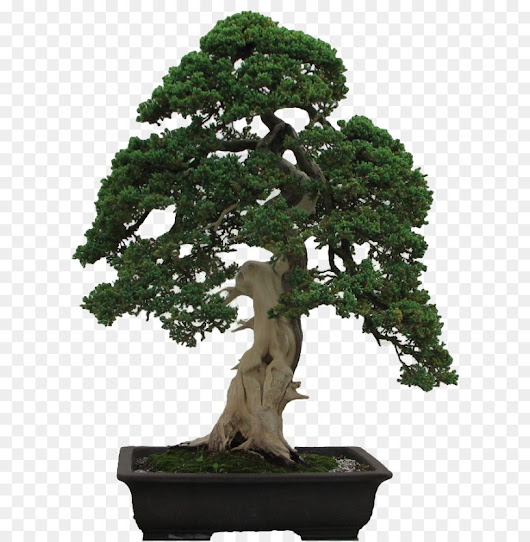 Indoor Bonsai History and Use