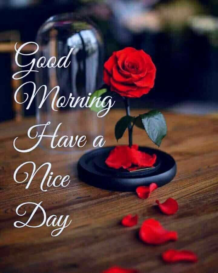 Mini Rose Good Morning Have A Nice Day Quote Pictures Photos And
