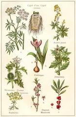 plantes veneneuses 1