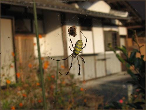 03 spider in my garden