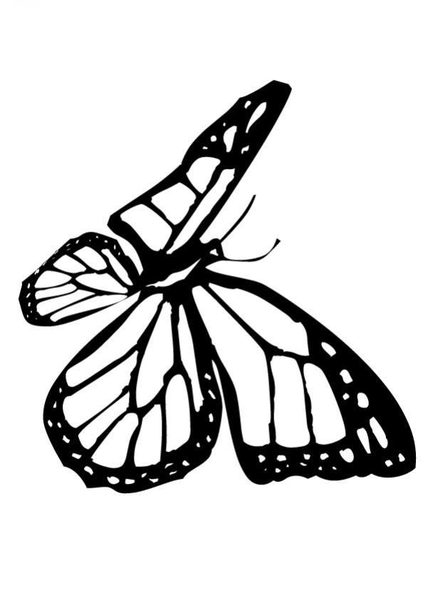Dibujos Para Colorear Una Mariposa Monarca Eshellokidscom