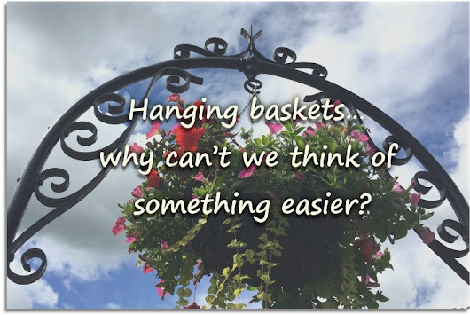 Hanging baskets & why you should avoid them