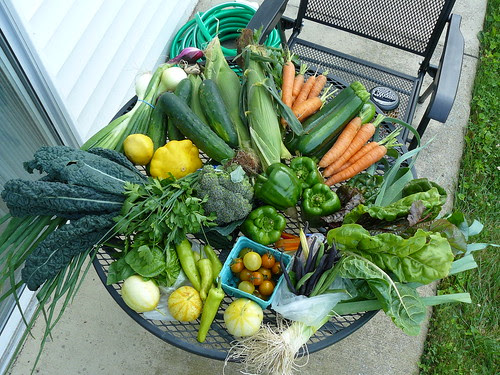 CSA share, week of 8/4/09