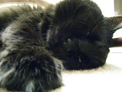 Sleepy Huggy Bear