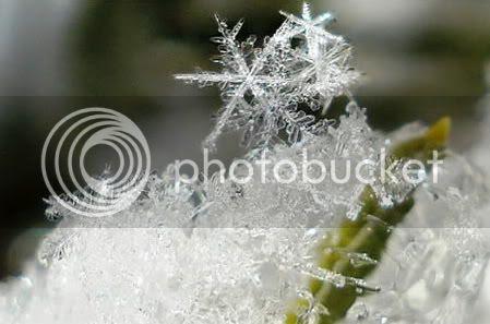 Serpih Salju