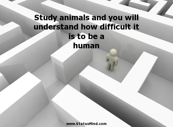 Study Animals And You Will Understand How Statusmindcom