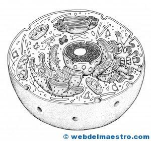 The Cell Web Del Maestro